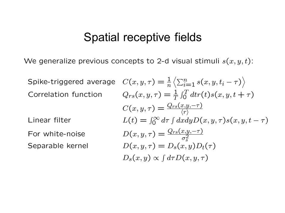 Spatial receptive fields