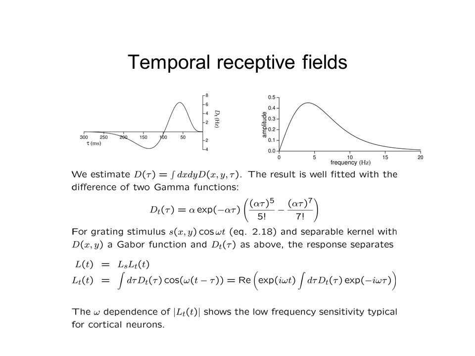 Temporal receptive fields