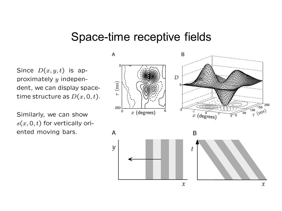 Space-time receptive fields