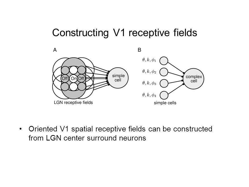 Constructing V1 receptive fields