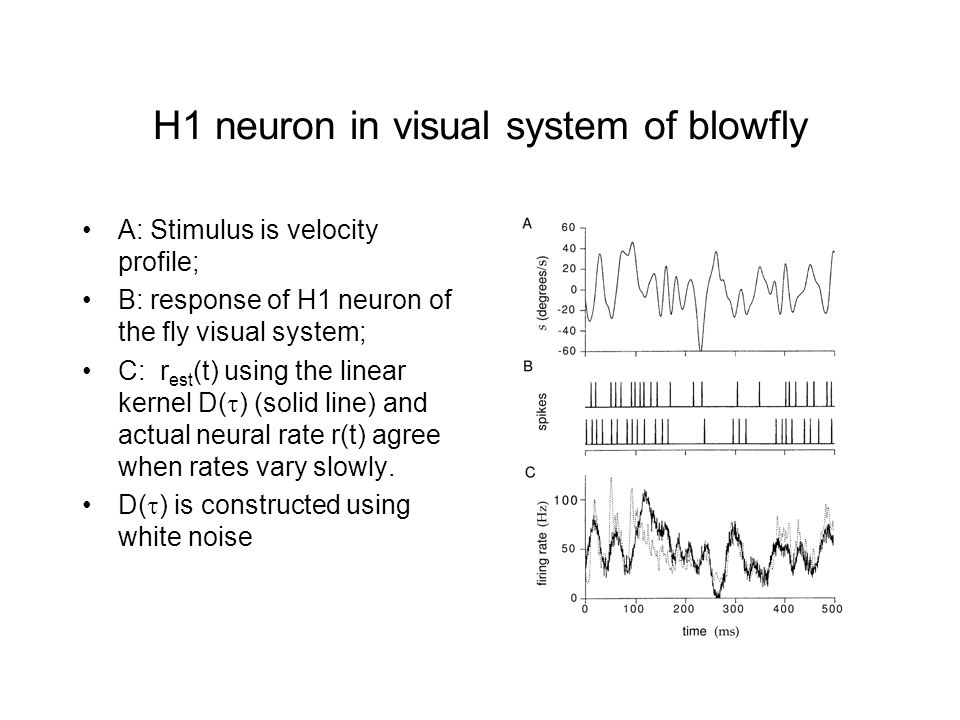 H1 neuron in visual system of blowfly