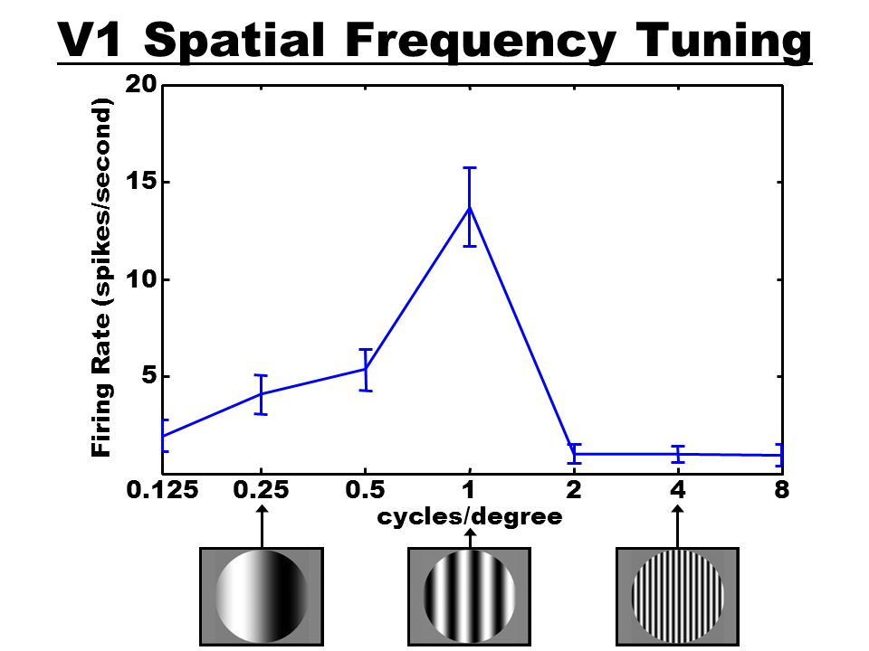 V1 Spatial Frequency Tuning