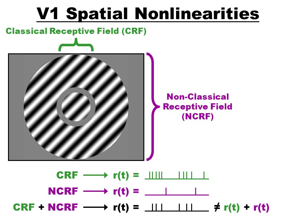 V1 Spatial Nonlinearities
