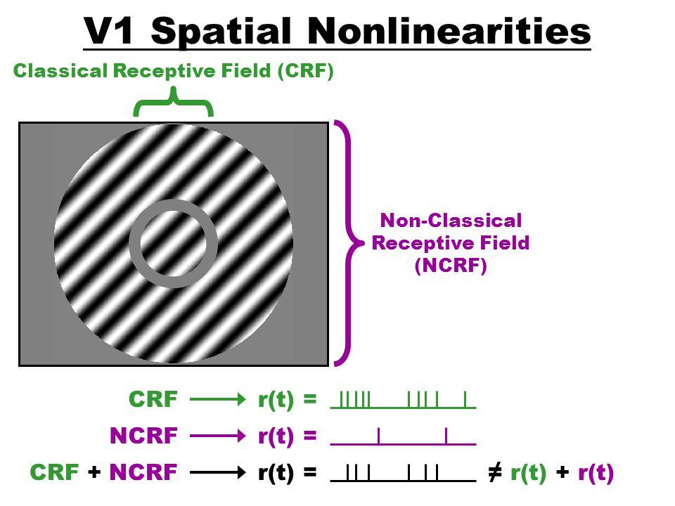 V1 Spatial Nonlinearities