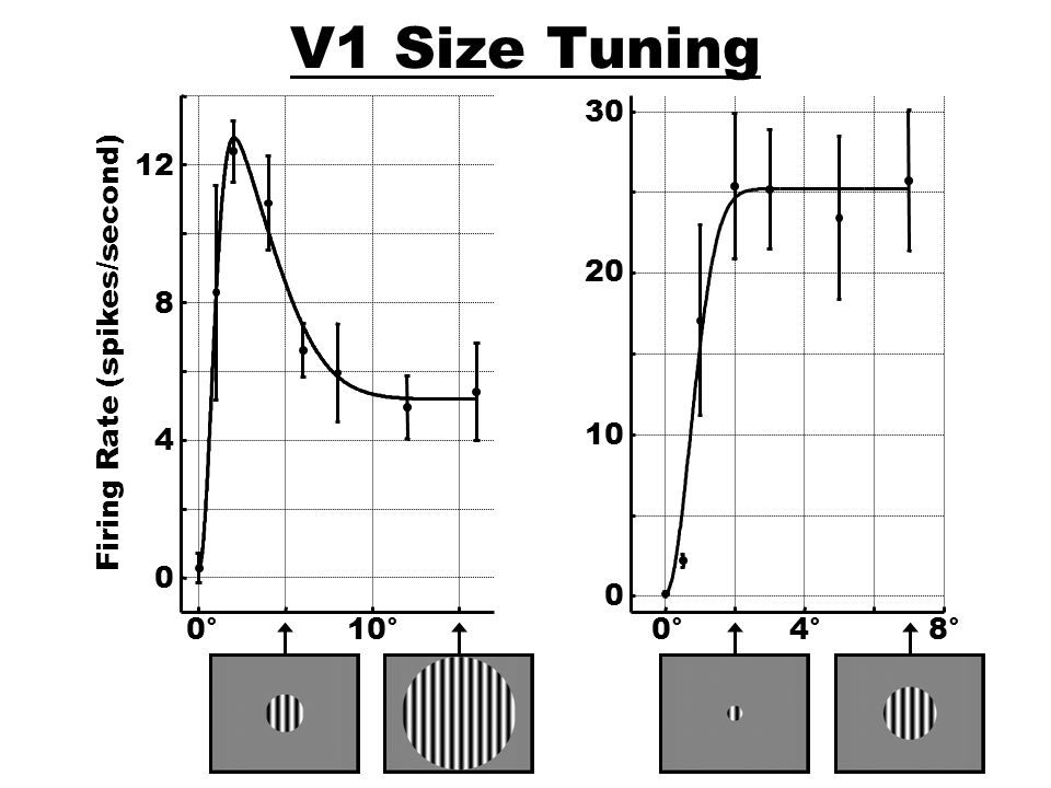 V1 Size Tuning 0° 10° 4 8 12 Firing Rate (spikes/second) 0° 4° 8° 10