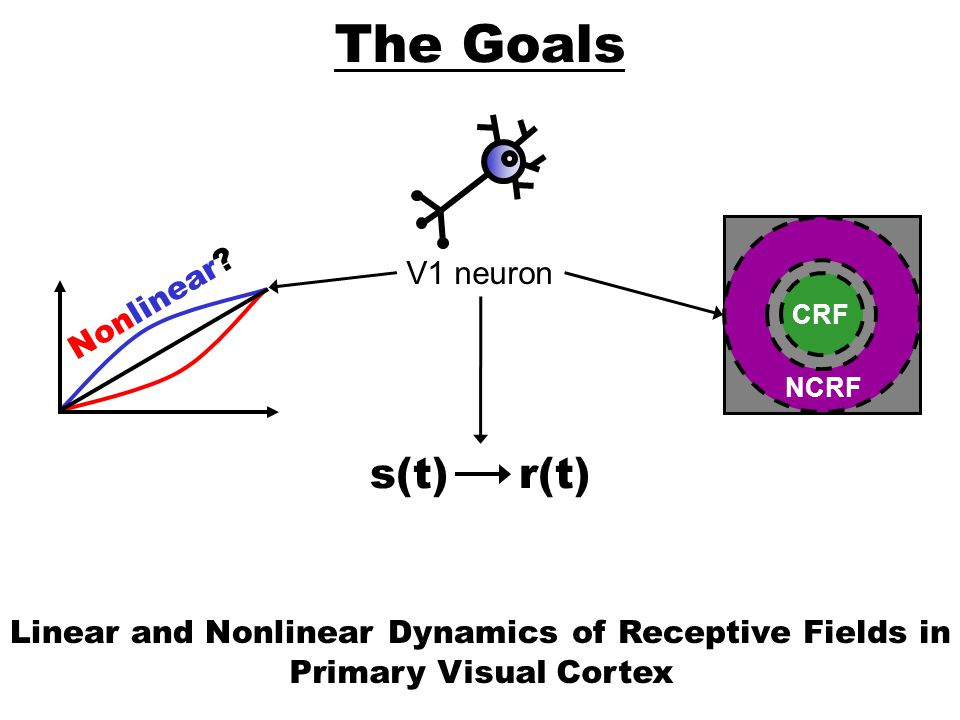 The Goals s(t) r(t) V1 neuron Nonlinear Linear and Nonlinear Dynamics