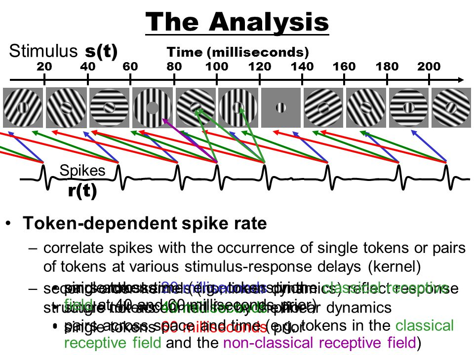 The Analysis Stimulus s(t) r(t) Token-dependent spike rate Spikes
