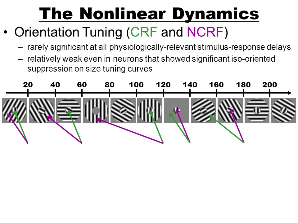 The Nonlinear Dynamics