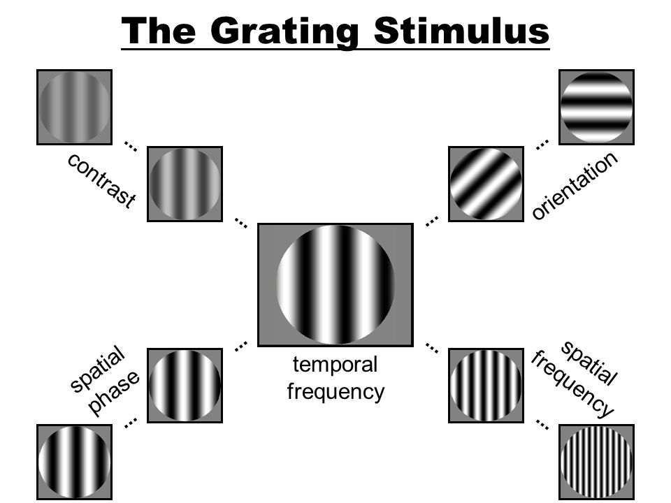 The Grating Stimulus contrast orientation spatial spatial frequency