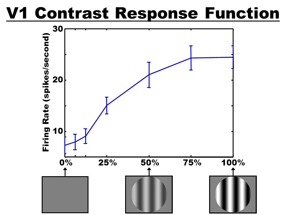 V1 Contrast Response Function