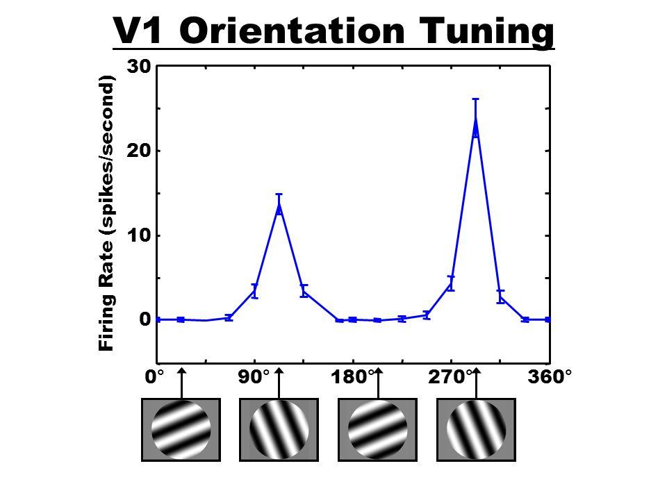 V1 Orientation Tuning 0° 90° 180° 270° 360° 10 20 30
