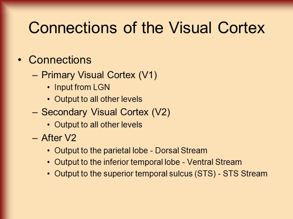 Connections of the Visual Cortex