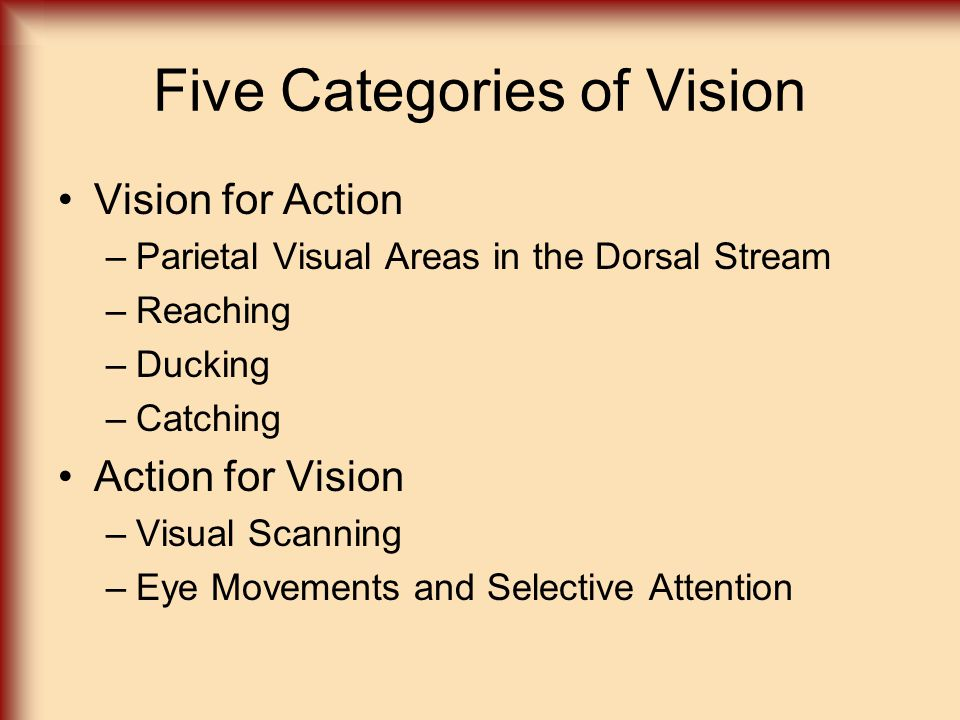 Five Categories of Vision