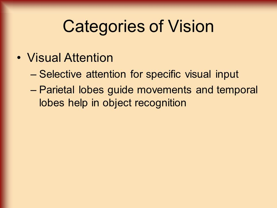 Categories of Vision Visual Attention