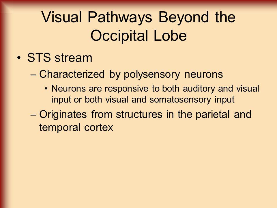 Visual Pathways Beyond the Occipital Lobe