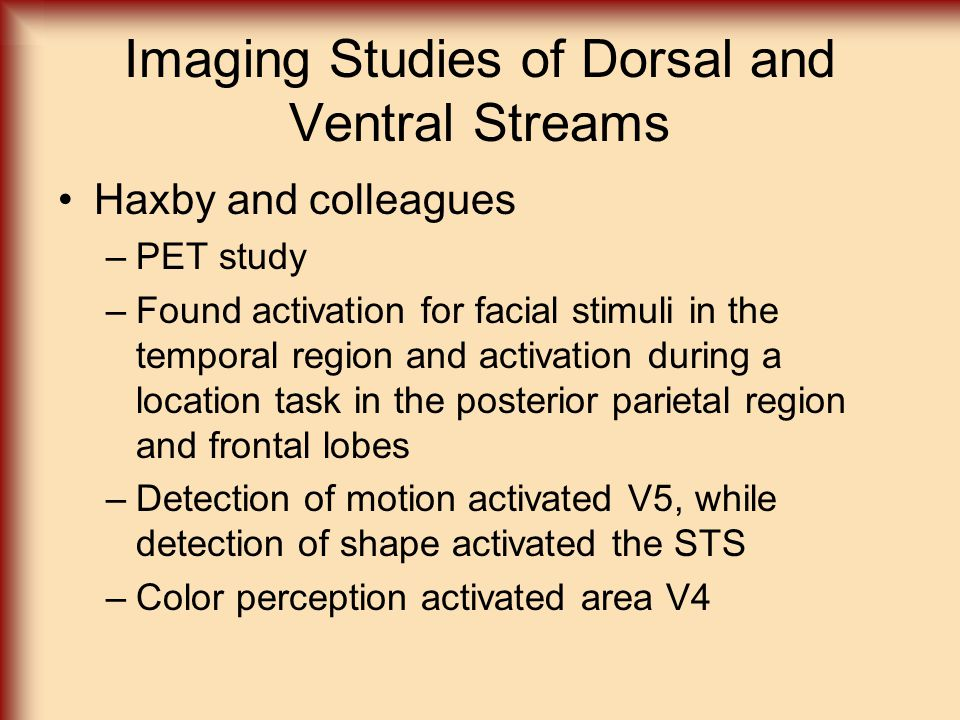 Imaging Studies of Dorsal and Ventral Streams