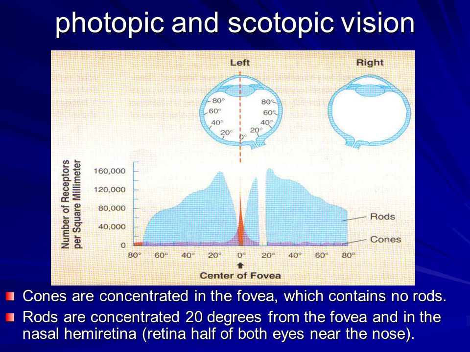 photopic and scotopic vision