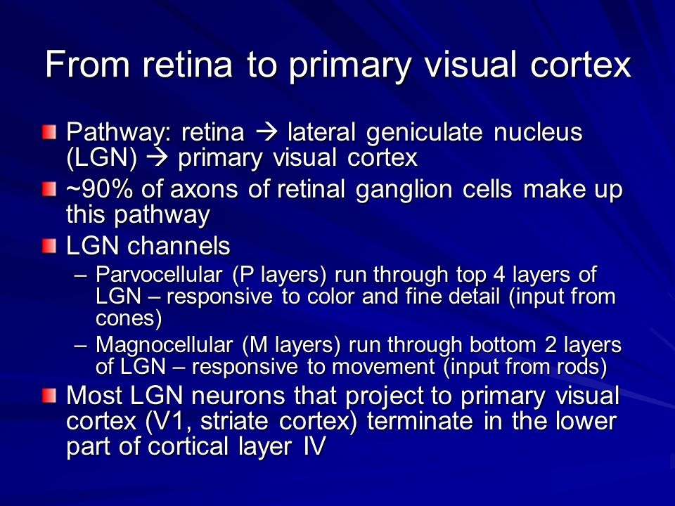 From retina to primary visual cortex