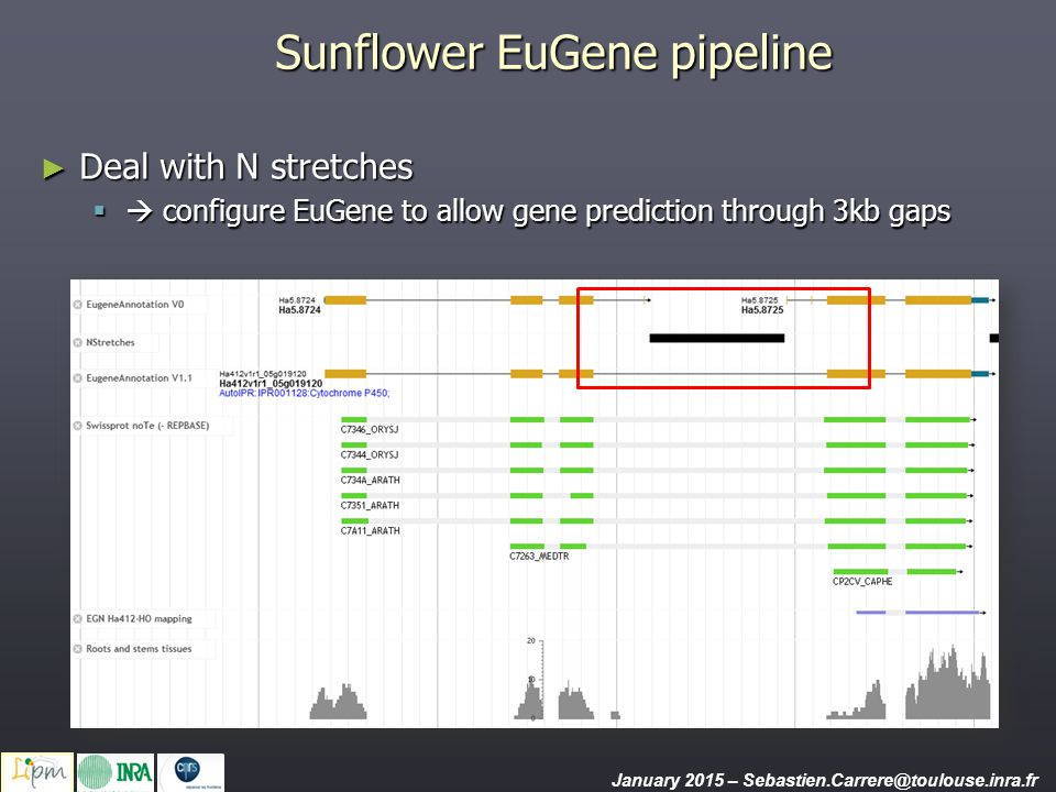 Sunflower EuGene pipeline