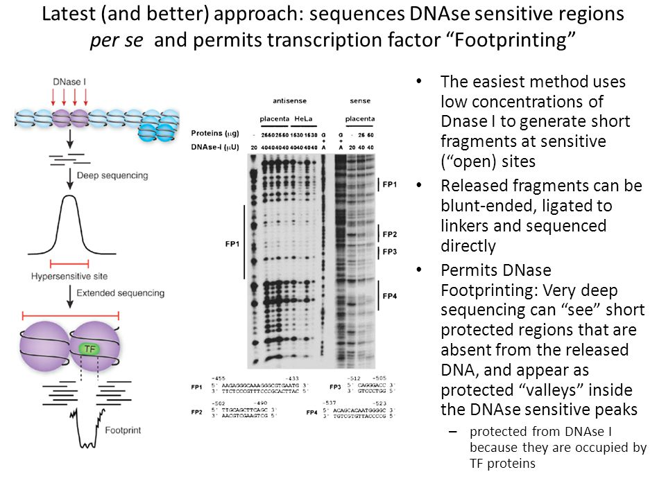 Latest (and better) approach: sequences DNAse sensitive regions per se and permits transcription factor Footprinting