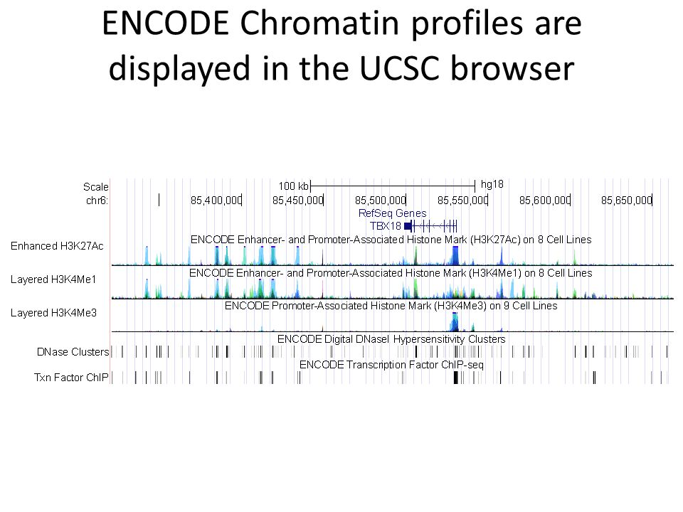ENCODE Chromatin profiles are displayed in the UCSC browser