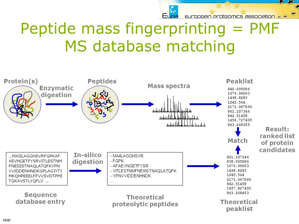 Peptide mass fingerprinting = PMF MS database matching