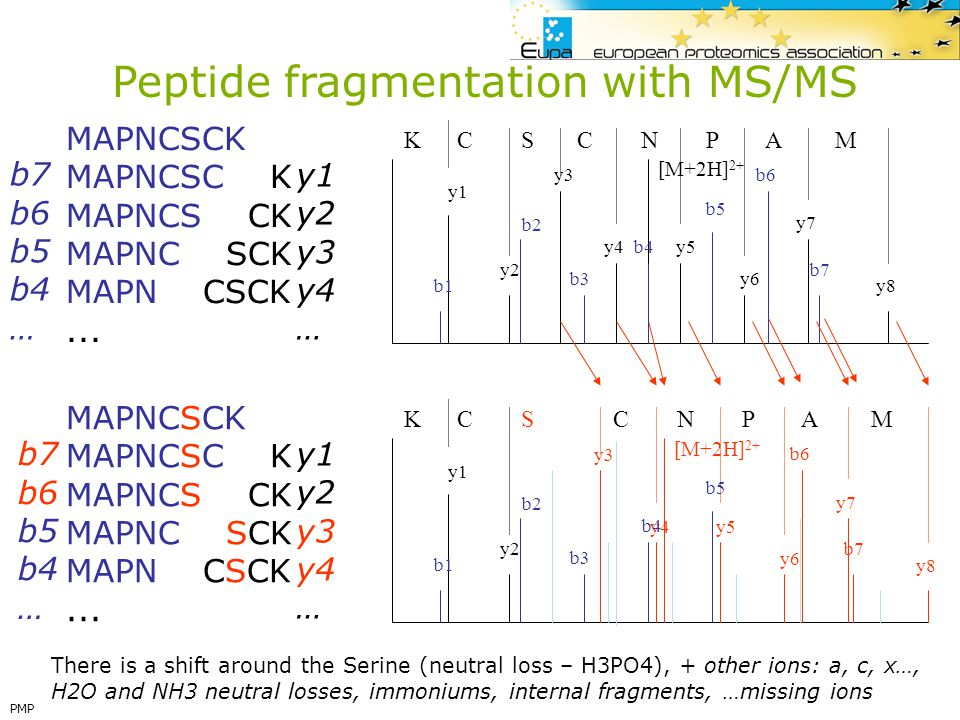 Peptide fragmentation with MS/MS