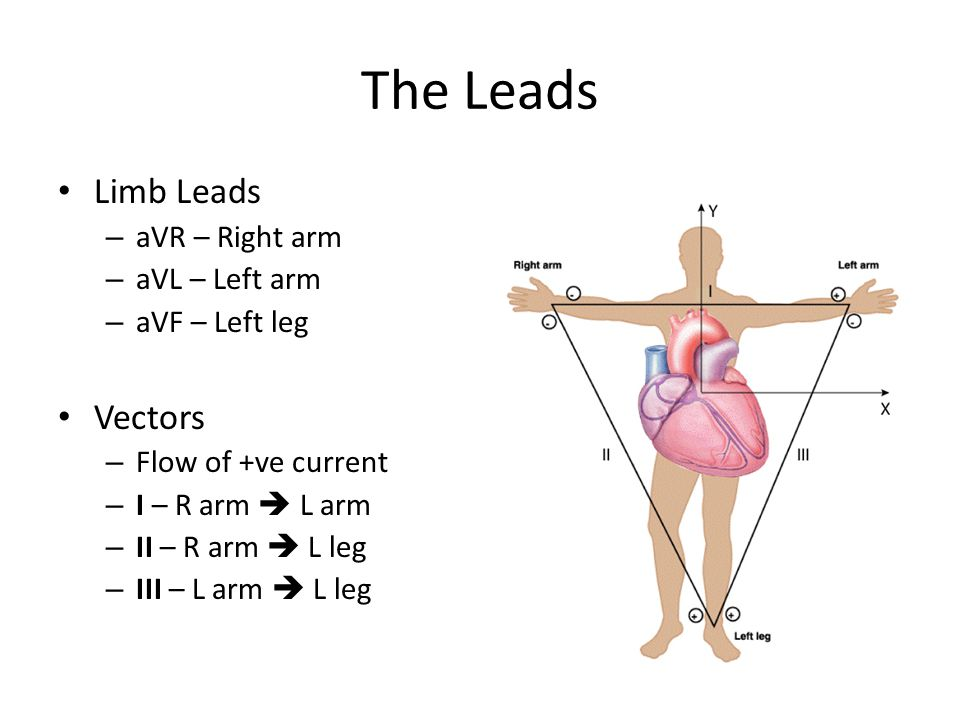 The Leads Limb Leads Vectors aVR – Right arm aVL – Left arm
