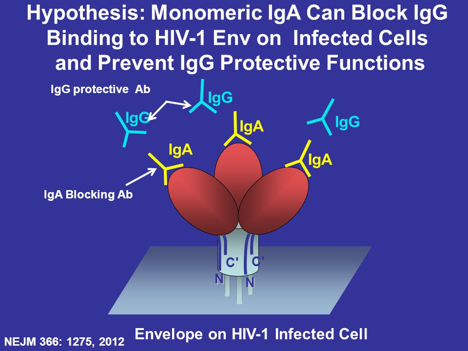 Hypothesis: Monomeric IgA Can Block IgG
