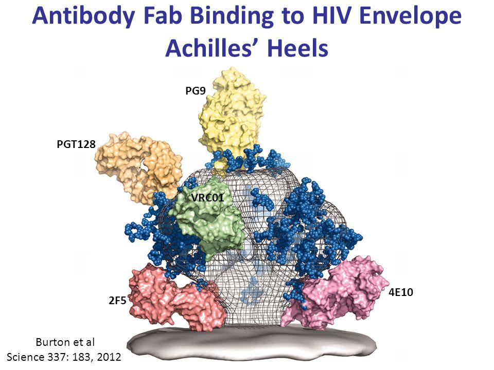 Antibody Fab Binding to HIV Envelope Achilles' Heels