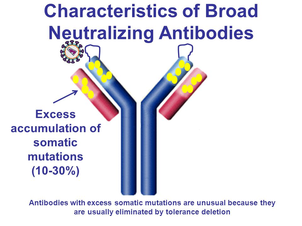 Characteristics of Broad Neutralizing Antibodies