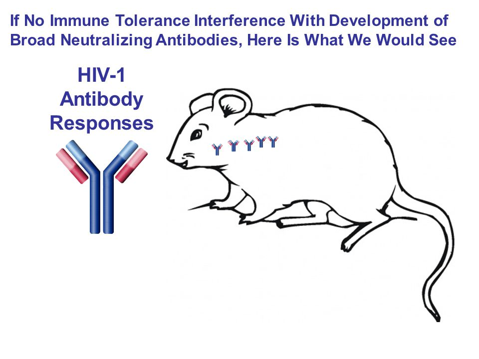 HIV-1 Antibody Responses