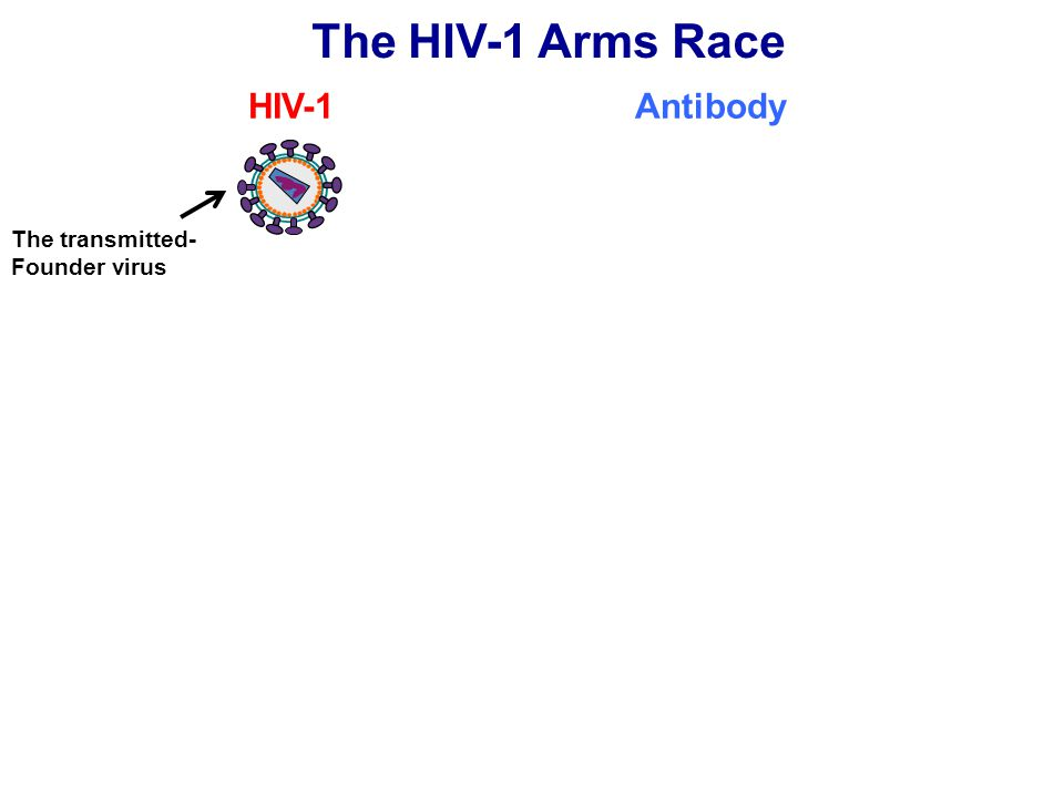 The HIV-1 Arms Race HIV-1 Antibody The transmitted- Founder virus
