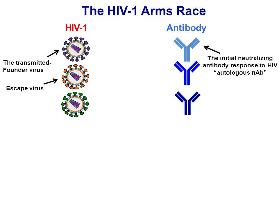 The initial neutralizing antibody response to HIV