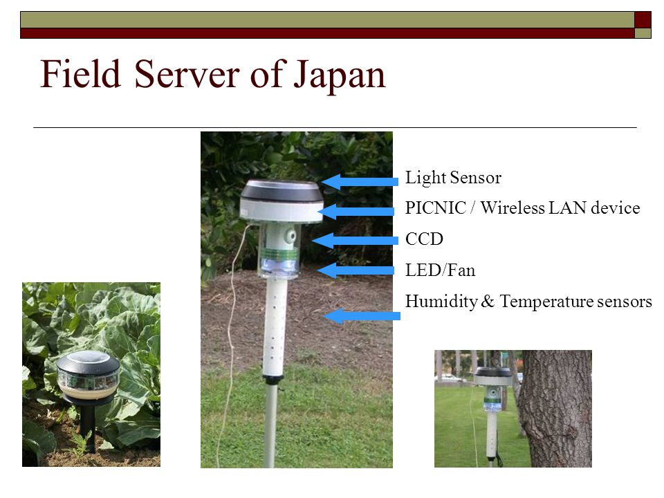 Field Server of Japan Light Sensor PICNIC / Wireless LAN device CCD