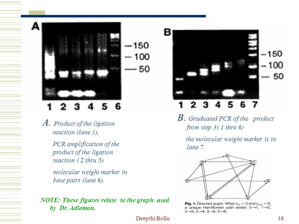 B. Graduated PCR of the product from step 3( 1 thru 6)