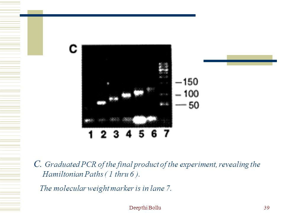 C. Graduated PCR of the final product of the experiment, revealing the Hamiltonian Paths ( 1 thru 6 ).