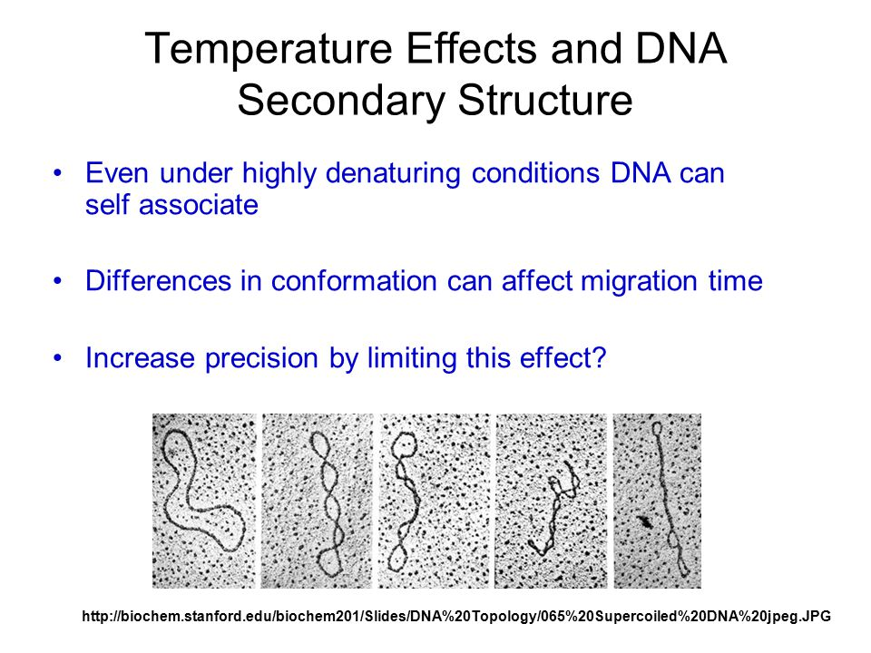 Temperature Effects and DNA Secondary Structure