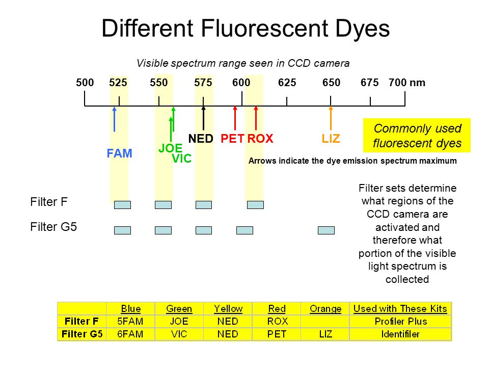 Different Fluorescent Dyes