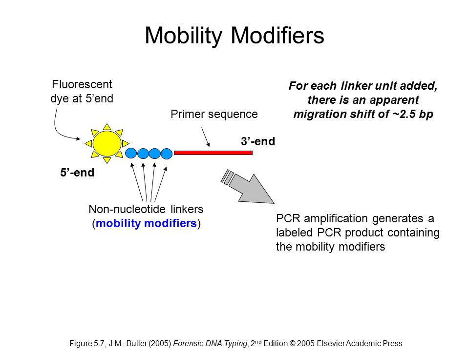Mobility Modifiers Fluorescent dye at 5'end