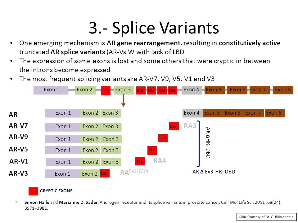 3.- Splice Variants