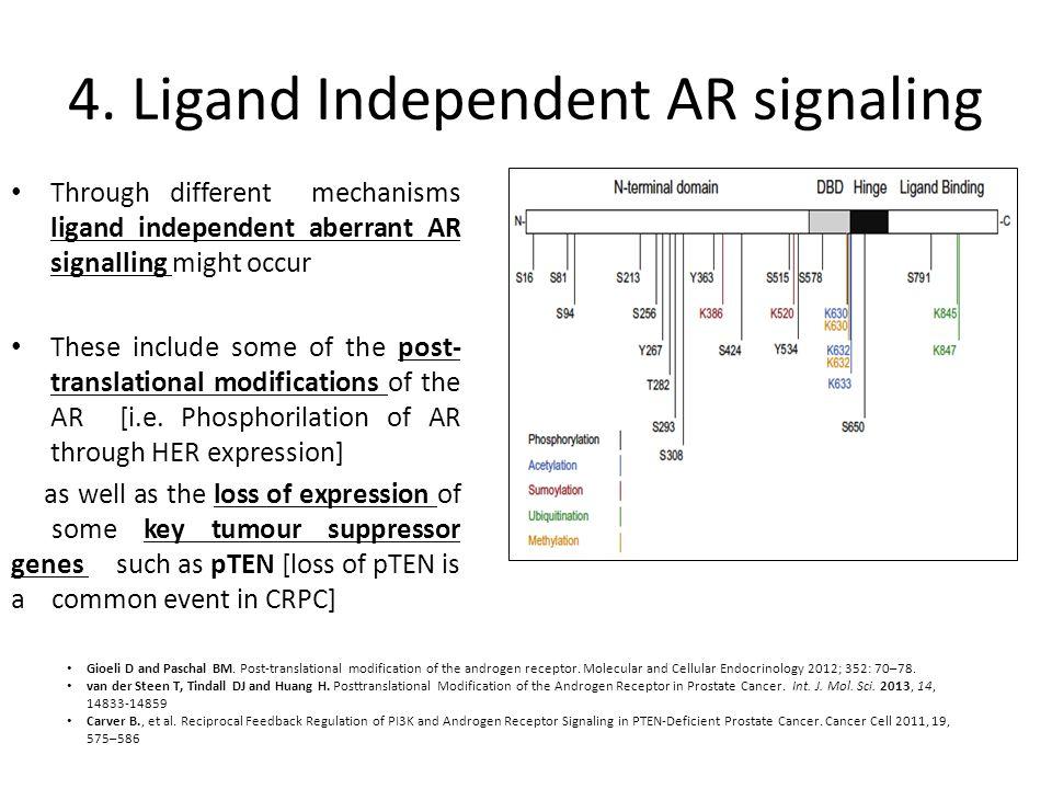 4. Ligand Independent AR signaling