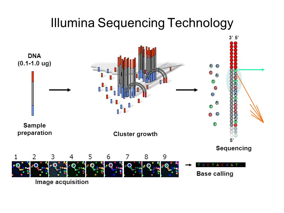 Illumina Sequencing Technology