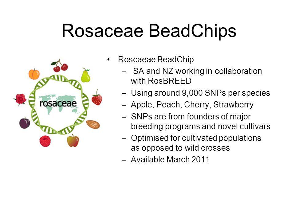 Rosaceae BeadChips Roscaeae BeadChip