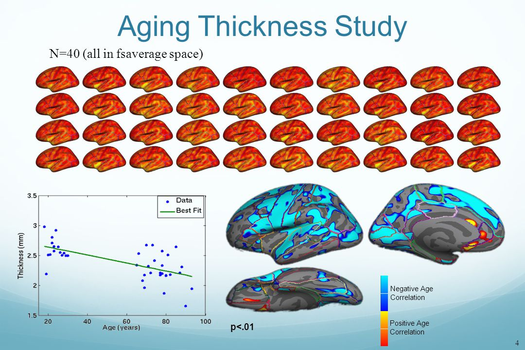 Aging Thickness Study N=40 (all in fsaverage space) p<.01