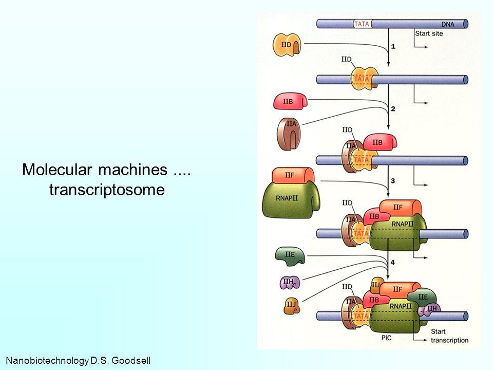 Molecular machines .... transcriptosome
