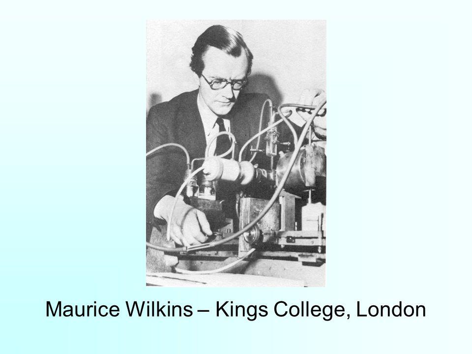 Maurice Wilkins – Kings College, London