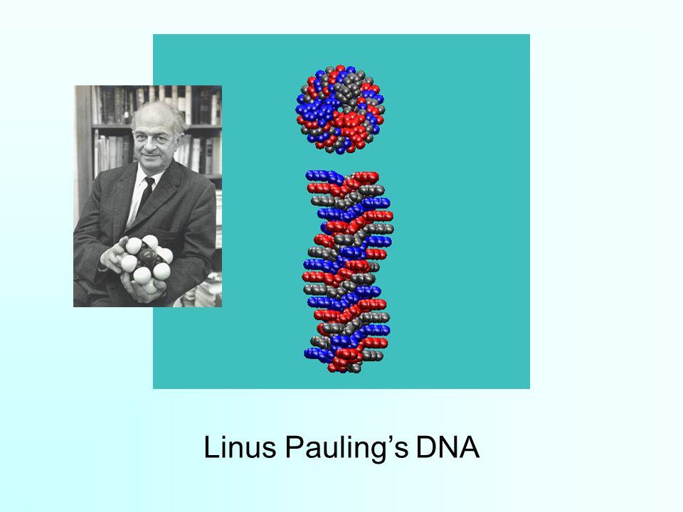 Linus Pauling's DNA