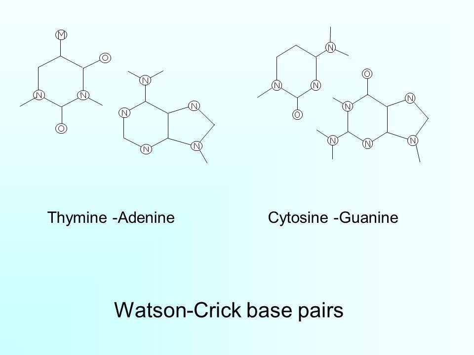 Watson-Crick base pairs