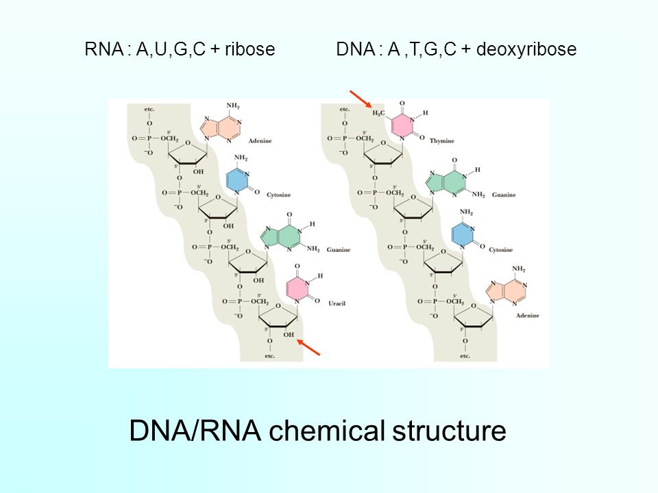DNA/RNA chemical structure
